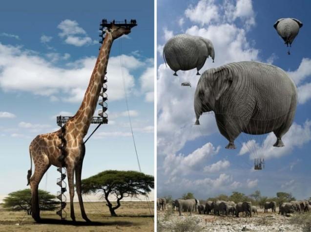 floating elephants